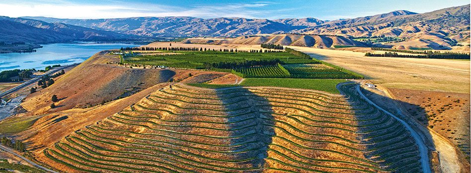 Akarua's 25 Steps vineyard in Central Otago